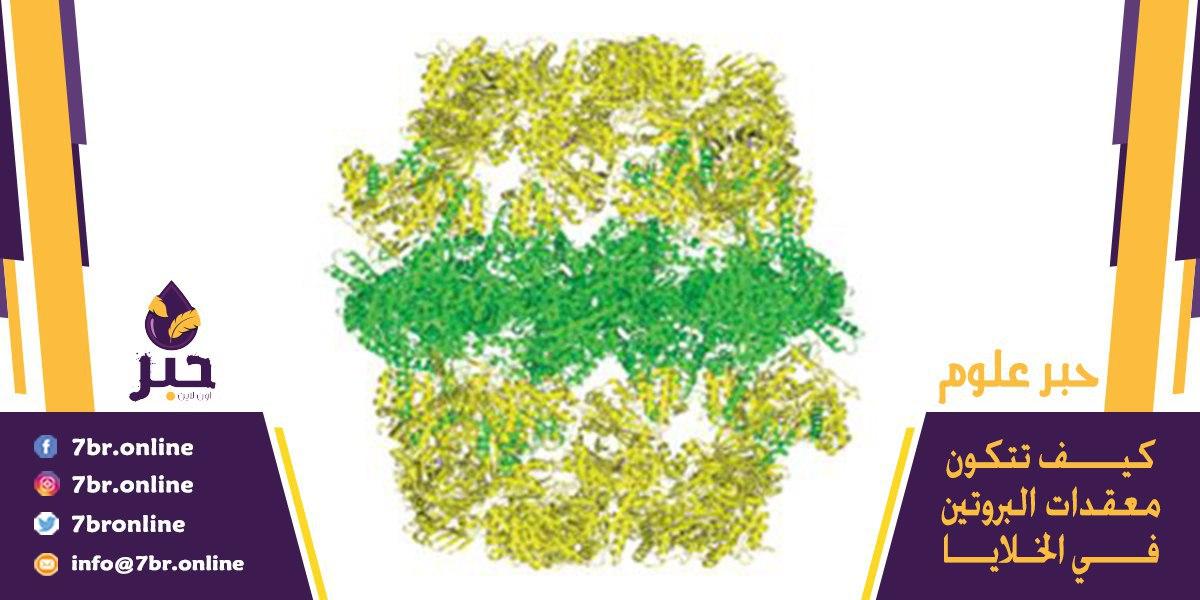 معقّدات البروتين - حبر أون لاين